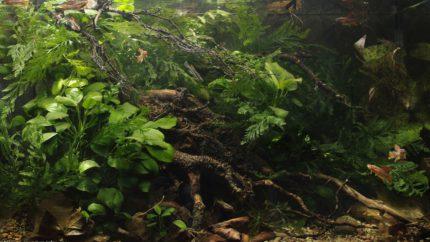 001_biotope-aquarium_a-17-1