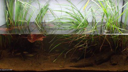 010_biotope-aquarium_a-16-1