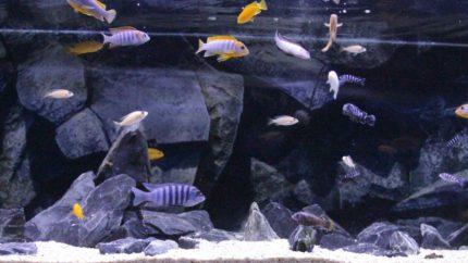 023_biotope-aquarium_a-8-1