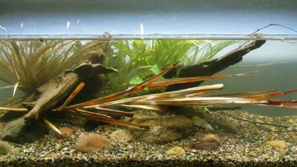 024_biotope-aquarium_ao-3-1
