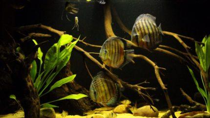 026_biotope-aquarium_sa-6-1