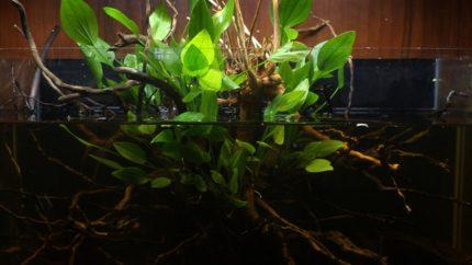 039_biotope-aquarium_sa-11-1