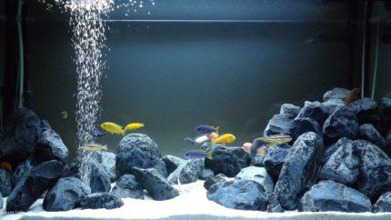 049_biotope-aquarium_a-1-1