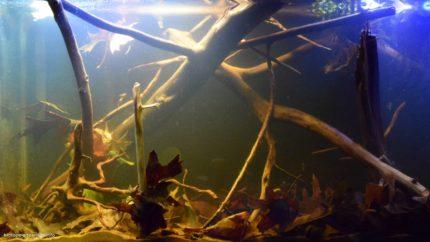 050_biotope-aquarium_sa-19-1