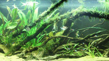 051_biotope-aquarium_sa-2-1