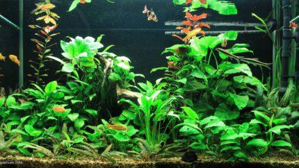 056_biotope-aquarium_e-4-1