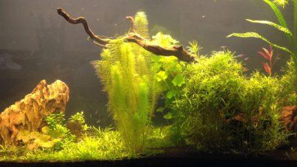 058_biotope-aquarium_sa-5-1