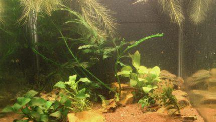 060_biotope-aquarium_a-11-1