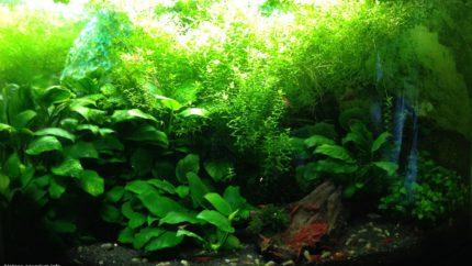 062_biotope-aquarium_a-3-1