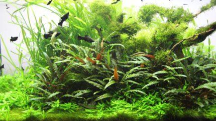 064_biotope-aquarium_e-12-1