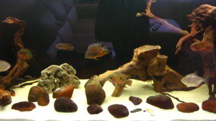 066_biotope-aquarium_sa-3-1