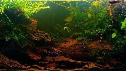 1600-Biotope-aquarium-design-contest-2014-AF