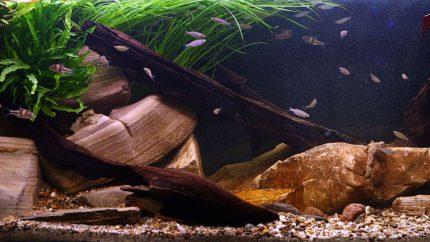1600-Biotope-aquarium-design-contest-2014-EU
