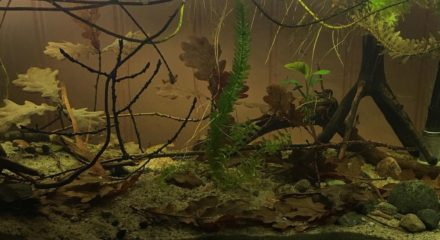 shallow_waters_in_orinoco_with_wild_guppies_1