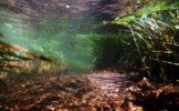 kamckatka-underwater-4