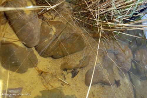 003_biotope-aquarium_ao-2-2