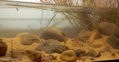 003_biotope-aquarium_ao-2-4