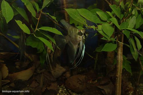 006_biotope-aquarium_sa-16-2