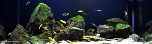 011_biotope-aquarium_a-18-1