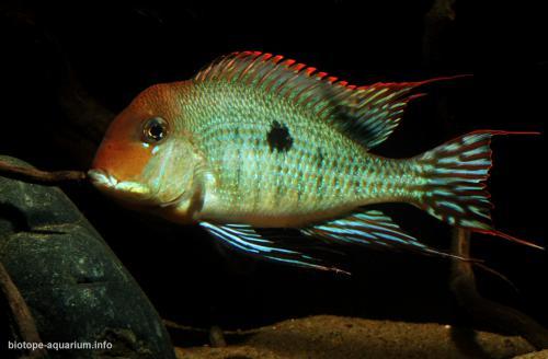 011_biotope-aquarium_sa-8-4