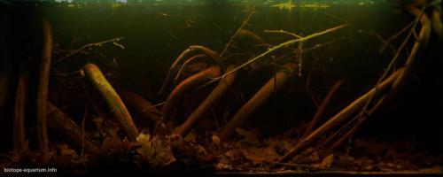 020_biotope-aquarium_sa-17-1