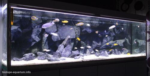 023_biotope-aquarium_a-8-2