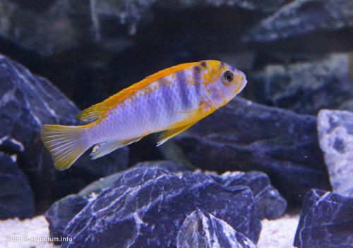 023_biotope-aquarium_a-8-4