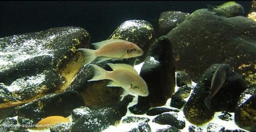 035_biotope-aquarium_a-13-3