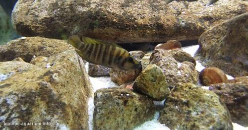 035_biotope-aquarium_a-13-4