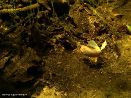 044_biotope-aquarium_e-6-2