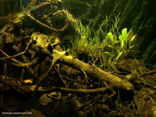 044_biotope-aquarium_e-6-4