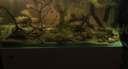 shallow-waters-in-orinoco-with-wild-guppies_6